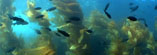 Kelp Forest Stock Footage